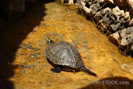 Turtle yellow orange reptile brown.