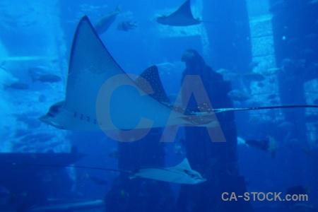 Uae dubai underwater water animal.
