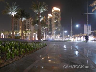 Uae middle east building night palm tree.