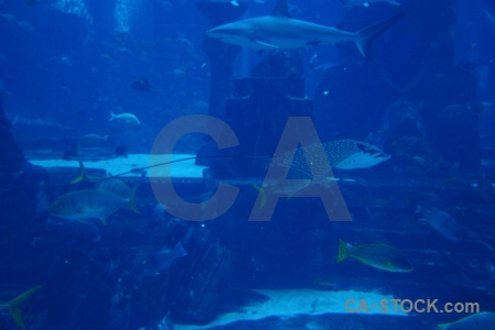 Uae western asia shark aquarium underwater.