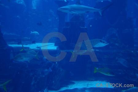 Uae western asia shark aquarium underwater.