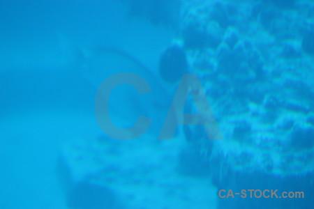 Underwater blue cyan.