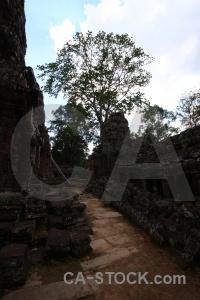 Unesco cambodia fungus southeast asia buddhist.