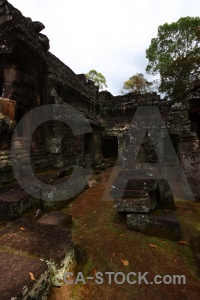 Unesco fungus southeast asia ruin banteay kdei.