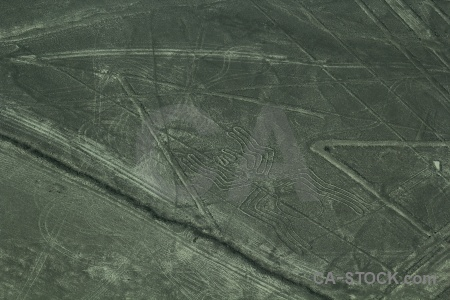 Unesco insect nazca lines animal spider.