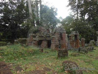Unesco lichen angkor ruin tree.
