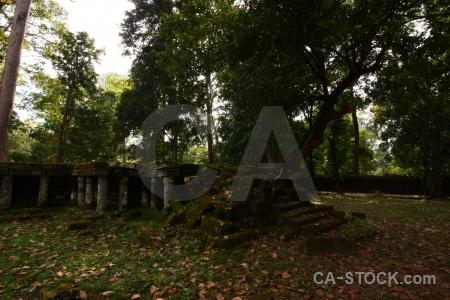 Unesco lichen cambodia step ruin.