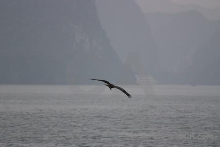 Unesco mountain animal asia cliff.