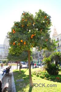 Valencia white tree europe person.