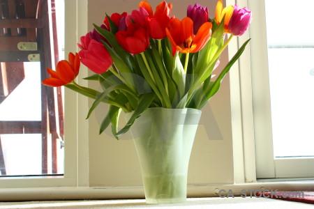 Vase bouquet tulip flower plant.
