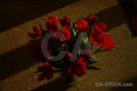 Vase flower plant bouquet tulip.