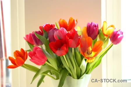 Vase flower tulip plant bouquet.