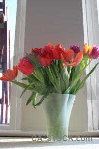 Vase plant tulip flower bouquet.
