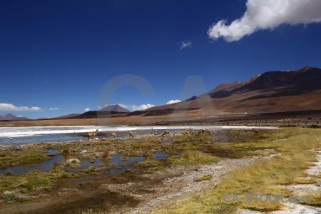 Vicugna landscape bolivia andes cloud.