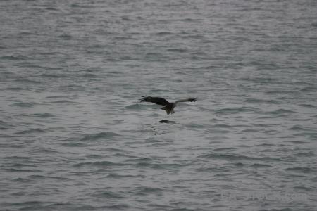 Vietnam ha long bay unesco bird sea.