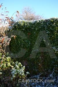 Wall cyan frost green.