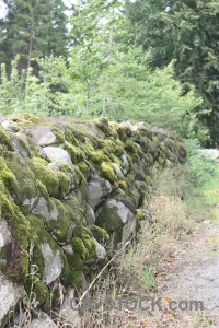 Wall moss stone green plant.
