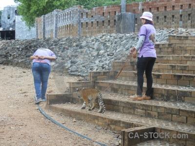 Wat pa luang ta bua yansampanno asia southeast whisker tiger.