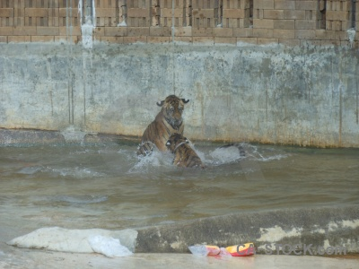 Wat pa luang ta bua yansampanno southeast asia water pool wat luangta maha yannasampanno.