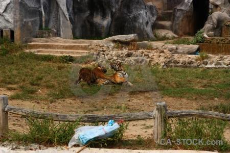 Wat pa luangta maha bua yannasampanno tiger grass pha luang ta southeast asia.