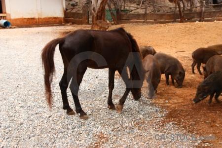 Wat pha luang ta bua animal pig pa luangta maha yannasampanno horse.