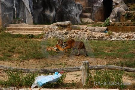 Wat pha luang ta bua animal tiger temple pa yansampanno luangta maha yannasampanno.