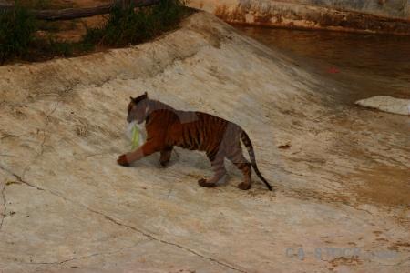 Wat pha luang ta bua wat pa luangta maha yannasampanno asia animal water.