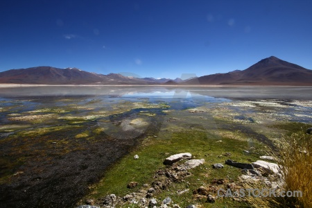 Water algae plant sky andes.