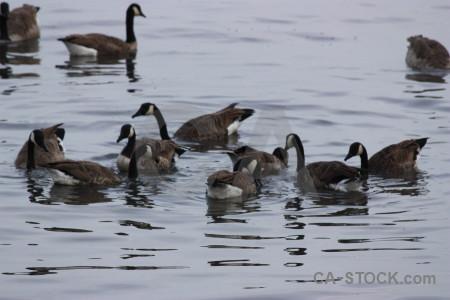 Water animal aquatic bird pond.