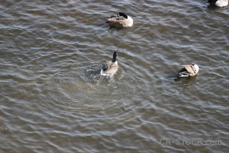 Water animal aquatic pond bird.