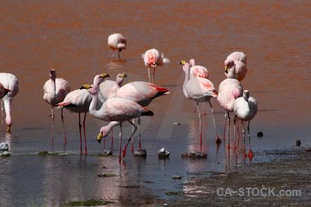 Water animal bird bolivia lake.