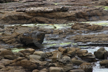 Water animal petrified forest catlins rock.