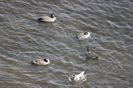 Water animal pond aquatic bird.