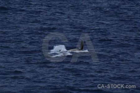 Water antarctica cruise animal whale drake passage.
