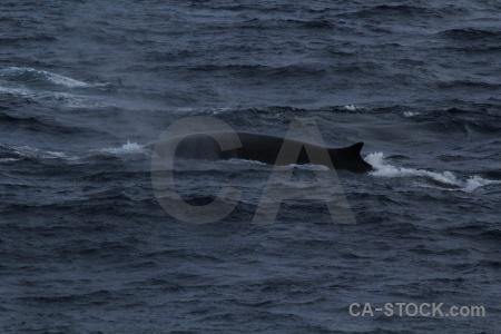 Water antarctica cruise drake passage sea whale.