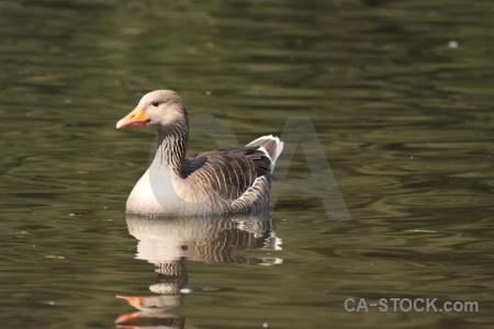 Water aquatic animal bird pond.