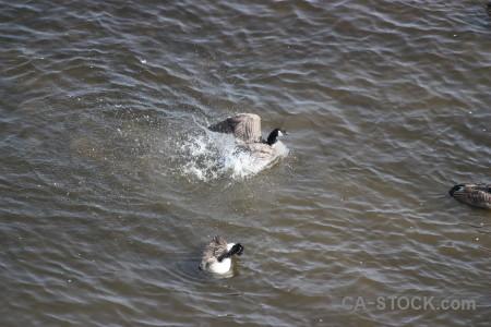 Water aquatic animal pond bird.