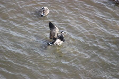 Water aquatic bird pond animal.