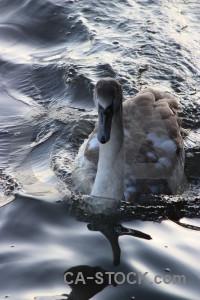 Water aquatic pond animal bird.