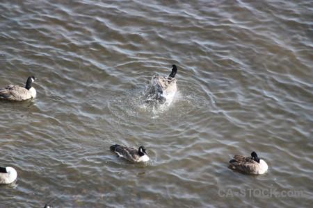 Water aquatic pond bird animal.