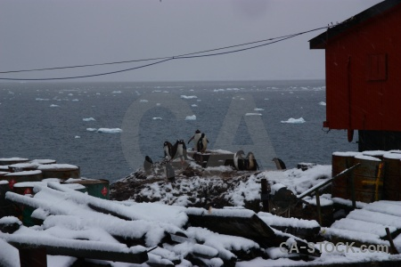 Water base brown building gentoo antarctica.