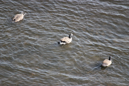 Water bird animal aquatic pond.