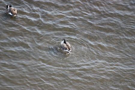 Water bird animal pond aquatic.