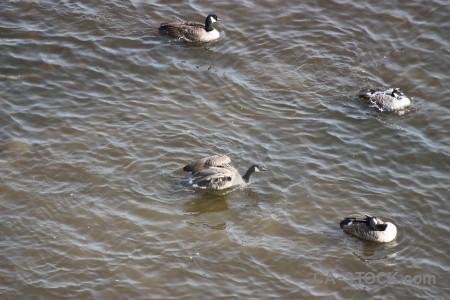 Water bird aquatic pond animal.