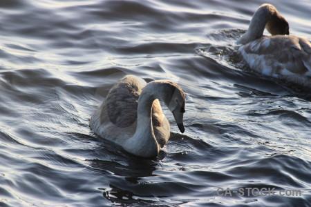 Water bird pond animal aquatic.