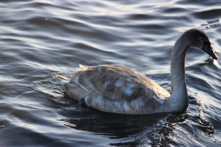 Water bird pond aquatic animal.
