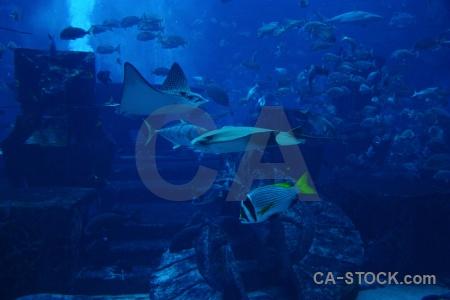 Water blue dubai aquarium uae.