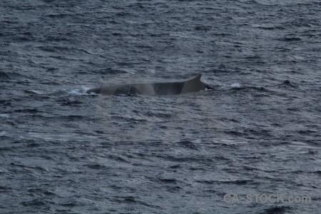 Water drake passage whale sea animal.