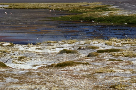 Water grass andes lake bolivia.