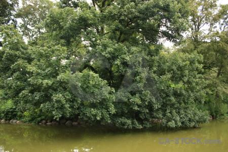 Water green lake tree.
